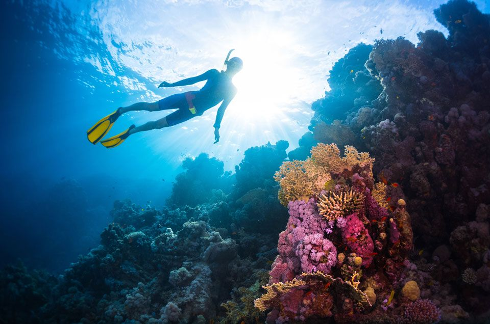 Chasing Coral Documentary Receives Peabody Award