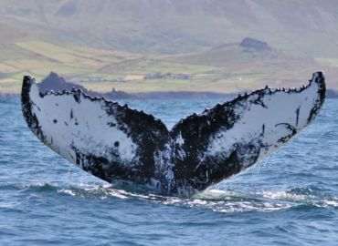 After 16 years, breeding ground for humpback whales discovered